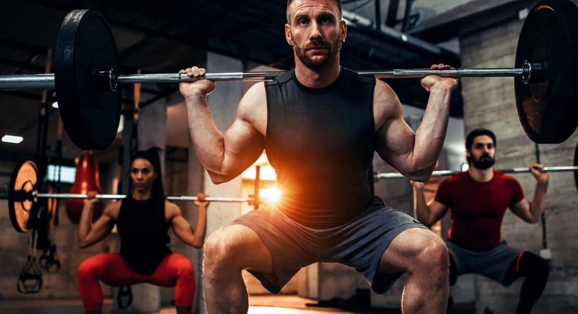 exercice musculation Endomorphe