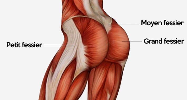 muscles-des-fesses