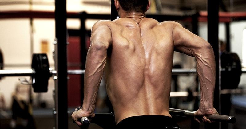 muscles sollicités par les dips