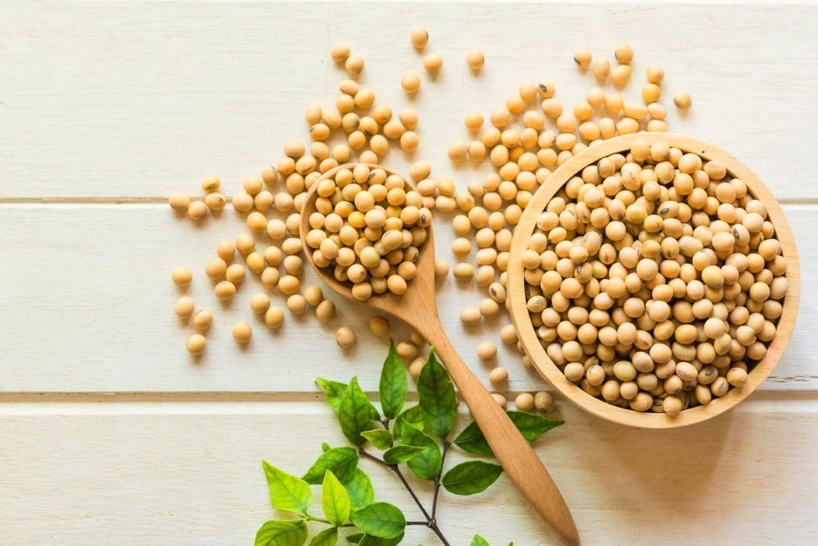 soja riche en proteines végétales