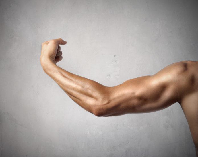Comment muscler ses avant-bras conseils et exercices